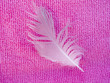 white feather in a pink background