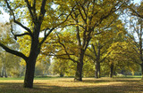 Beautiful quiet park in bright autumnal colors poster