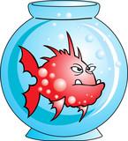 Red angry Comic fish in aquarium poster
