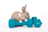 brown bunny and a weight