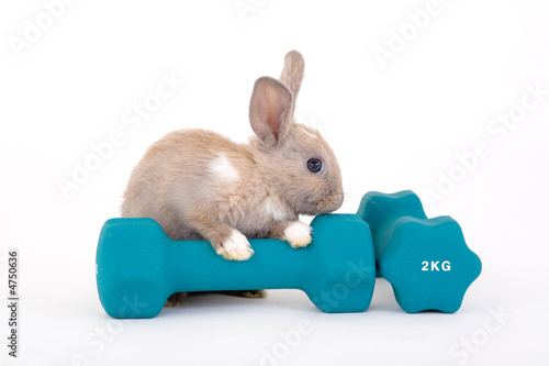 brown bunny and a weight - 4750636