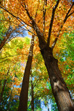 Fototapety Fall forest
