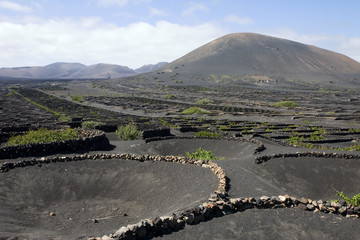 Typical vineyard in La Geria, Lanzarote, Canary Islands, Spain