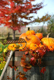 Fototapety Rake and pumpkins laying on wine barrel