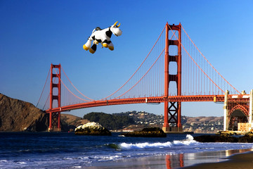 cow over the golden gate