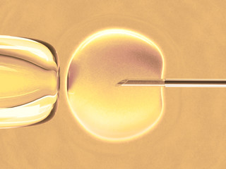 In vitro fecundation using sperm (warm color)