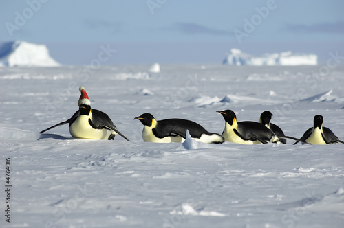 Antarctic Christmas procession - 4764016