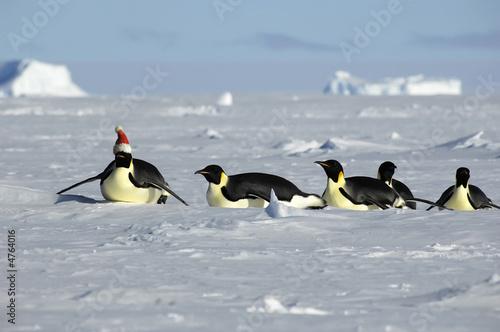 Leinwandbild Motiv Antarctic Christmas procession