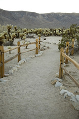 footpath to a cholla garden