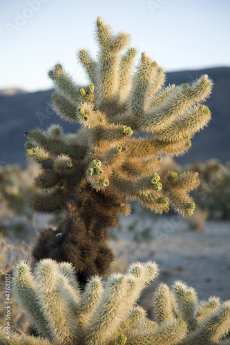 Cholla DO NOT TOUCH
