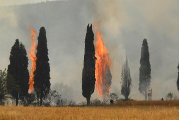 Incendio cipressi