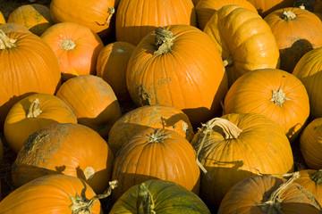 Load of Pumpkins
