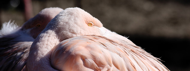 flamant rose 3