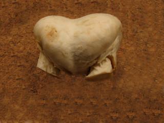 duble mushroom