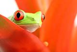Fototapete Laubegg - Tier - Reptilien / Amphibien