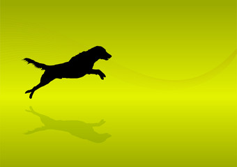 Animals Silhouette - Dog