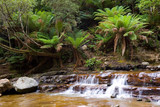 Waterfall in Rainforest poster