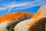 Stunning orange lichen on coastal granite boulders poster