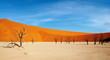 Dead trees in Dead Vlei - Sossusvlei, Namib desert, Namibia.