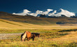 Landscape with grazing horses and snowy mountains