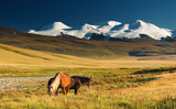 Landscape with grazing horses and snowy mountains poster