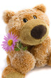 Soft toy the bear  with a flower on a white background