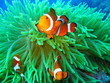 Leinwanddruck Bild Nemo found