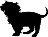 Animali silhouette - cani - Barboncino poster