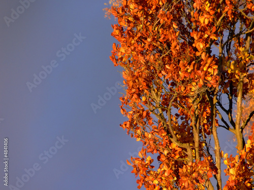 Grey Sky Orange Bush