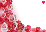 Fototapety Abstract border, flowers, white and rose background