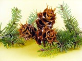 spruces twigs with cones poster