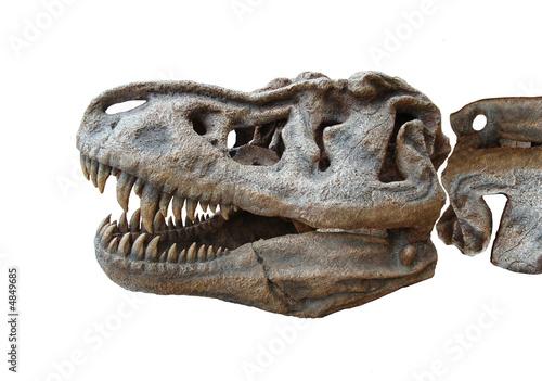 Dinosaur - 4849685