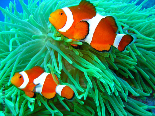 canvas print picture Nemo found