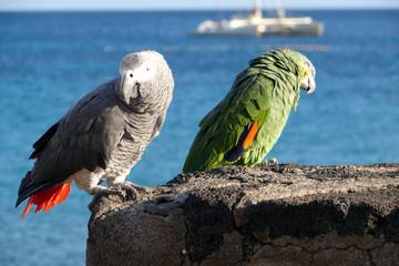 Perroquets de Lanzarote