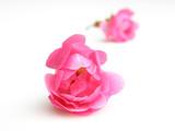 pink rose - 4864835