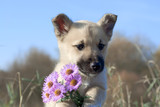 puppy dog hold flowers in forefoots
