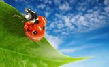 Ladybug on green leaf over blue sky background poster