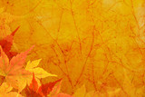 Fototapety Vintage canvas background with  autumn leaves.