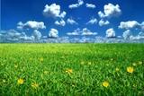 Fototapety infinite meadow