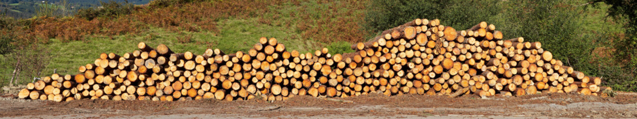 Panoramic view of logs stacked