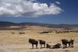 tanzania, serengeti, swahili, wildlife, scenery, safari, africa