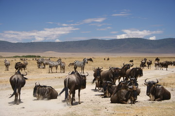 Tanzania, Wildlife, scenery, Pemba, Swahili, Safari, Serengeti
