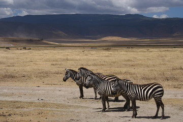 tanzania, serengeti, swahili, wildlife, scenery, safari, africa