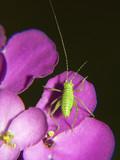 Fototapete Insekt - Natur - Insekten