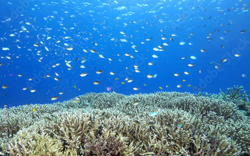 Tropical Fish and Corals on the Reef
