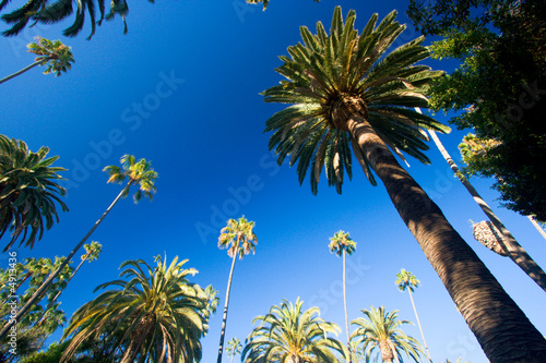 Plexiglas Palm boom California palm trees
