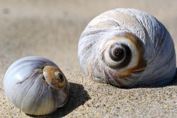 seashells up close