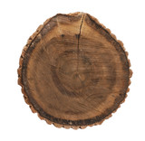 oak stump poster