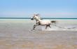 roleta: Bathing of a horse
