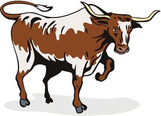 Charging texas longhorn bull